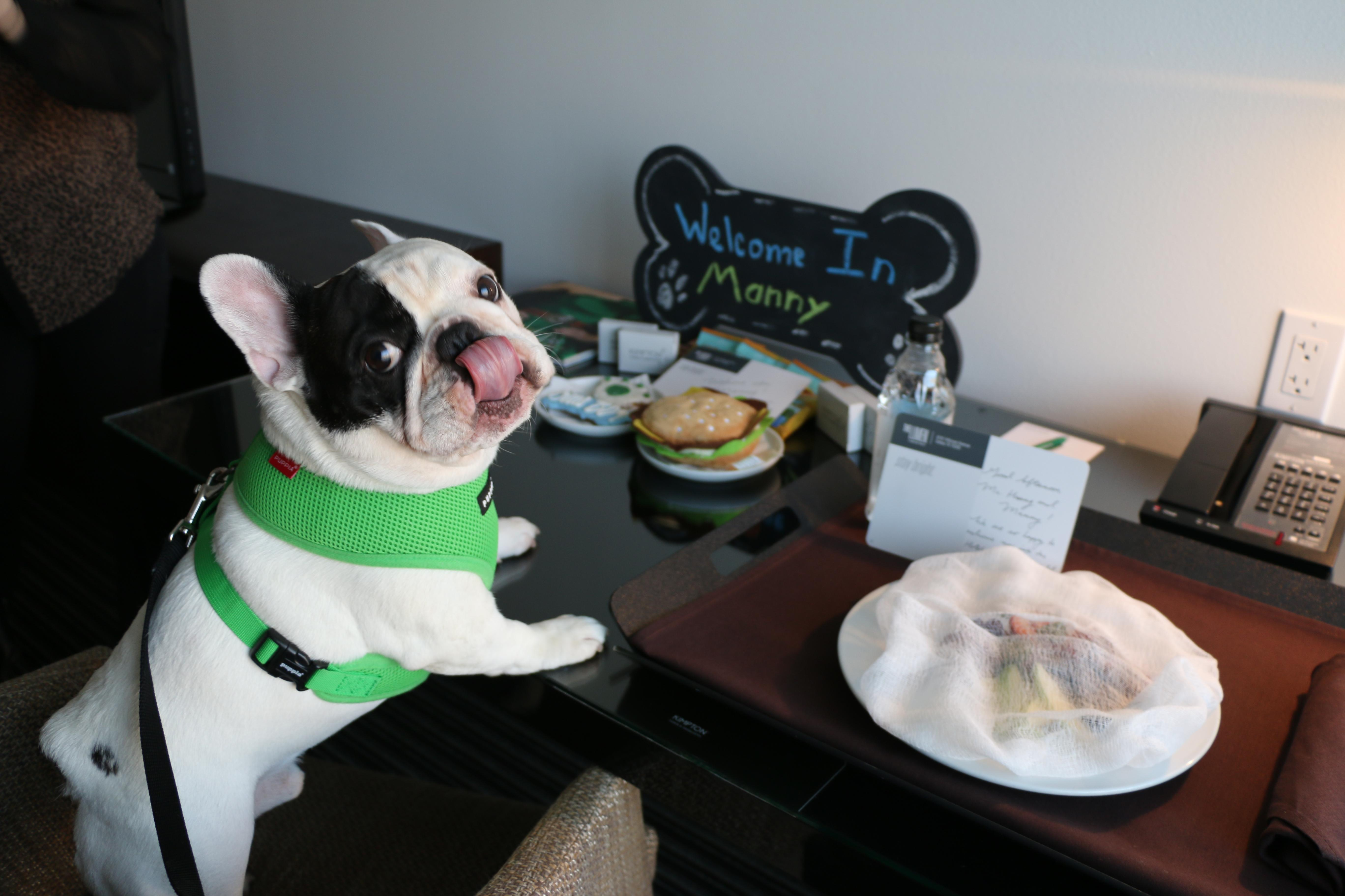 Image source: Manny the Frenchie