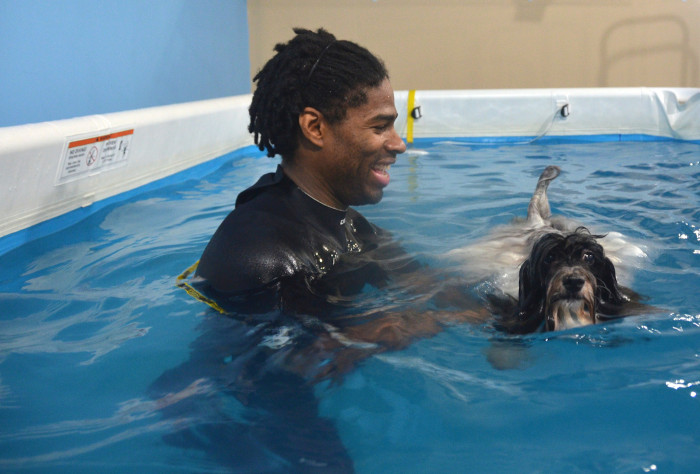 If you have an older or injured dog, pool exercises can be a safe choice. Image source: Sylvia Cordero-Skidmore