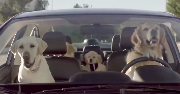 Believe It Or Not The Driving Dog Isn T Even The Funniest
