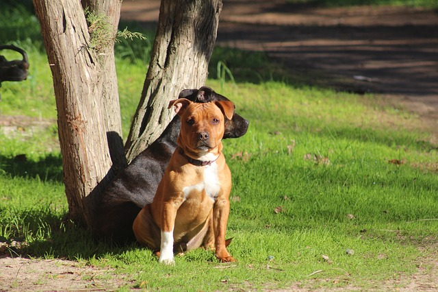 12 Things You Didn't Know About Pit Bulls