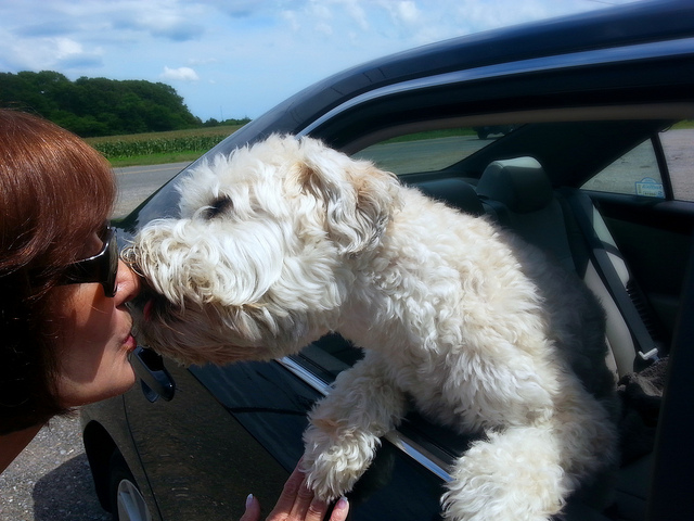 New Study Proves Dog Kisses May Actually Boost Your Immune