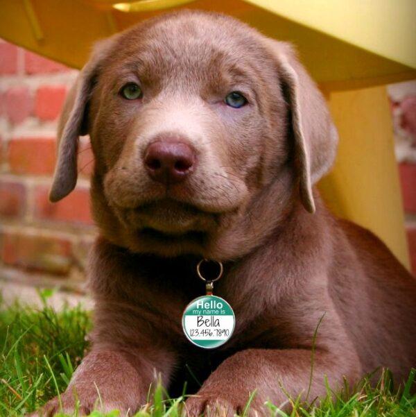 Cute dog name tag