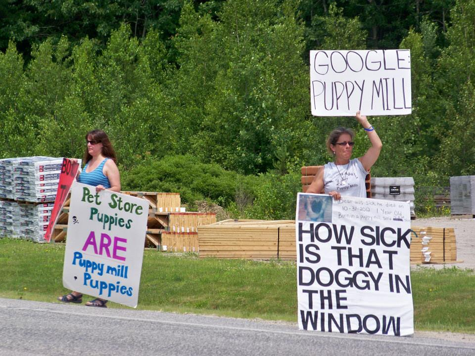 Image source: Maine Citizens Against Puppy Mills