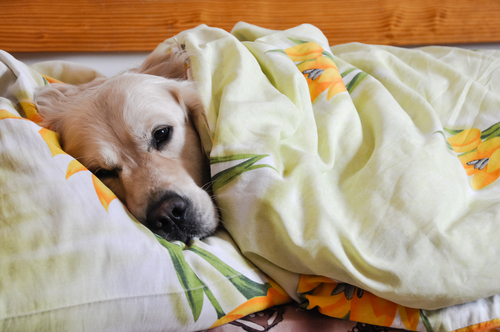 5 Reasons Sharing Your Bed With Your Dog Is Awesome