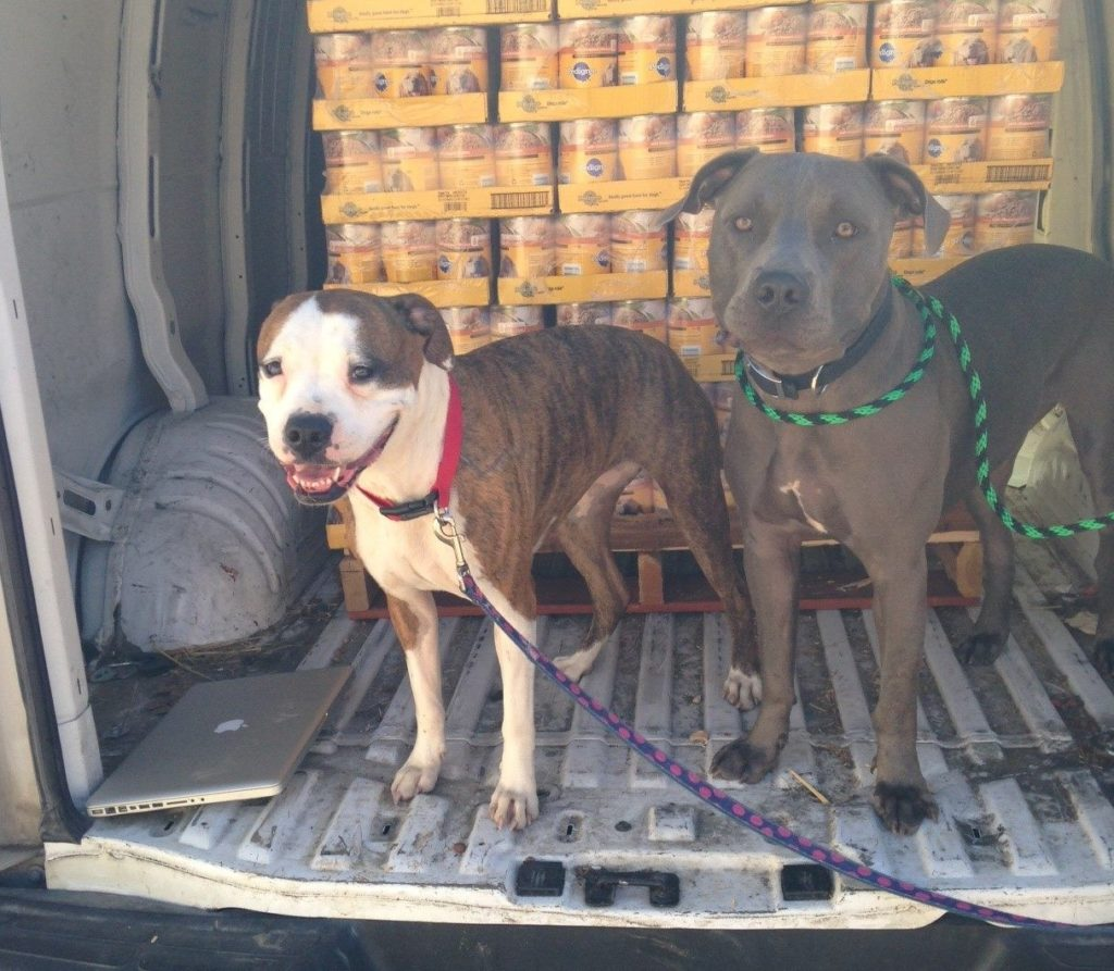 "This is Lilly and Blaze from Legacy of Hope Animal Rescue in Broken Arrow OK saying ""Yum, Thanks Rescue Bank and Mars for the great canned Pedigree!"" at the latest distribution by our affiliate Pets and People. Legacy of Hope places around 80 dogs each year! We are so glad we can help!"