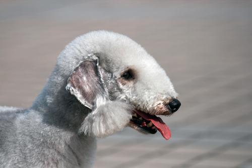 Most Odd Dog Breeds