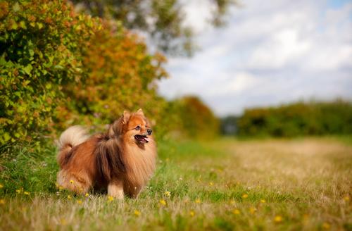 10 Smartest Small Dog Breeds