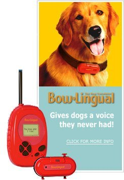 15 Absurd Dog Products You Ve Gotta See To Believe