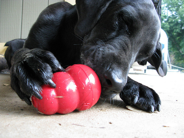 Top 10 Healthiest Human Foods For Your Dogs – Thoughtsmag