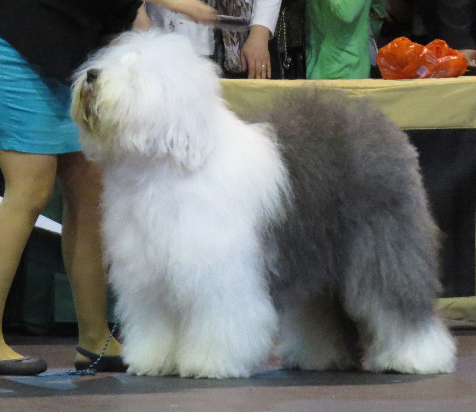12 Dog Breeds With Unique Coats