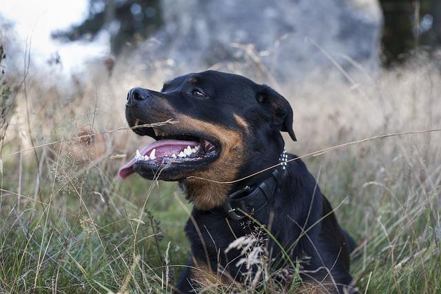 dog-455225_640