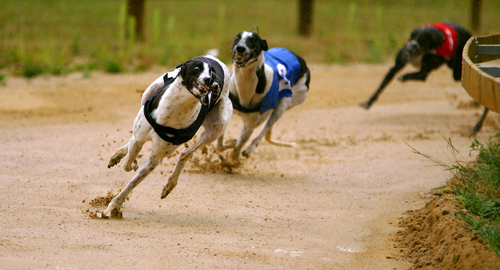 15 Of The Fastest Dog Breeds