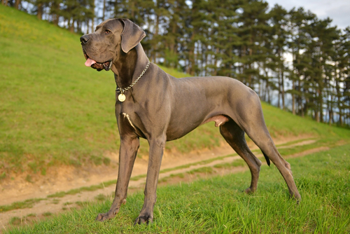 11 Dog Breeds That Are Gentle Giants