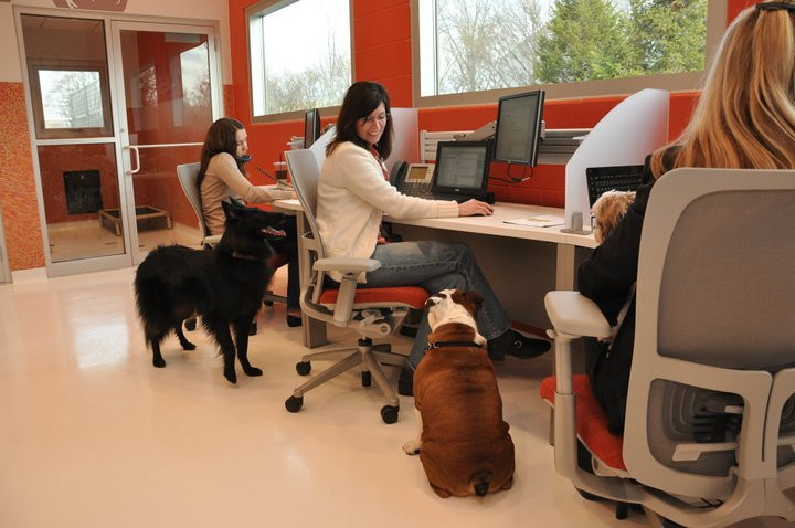 What Would Be A Good Workplace Dog