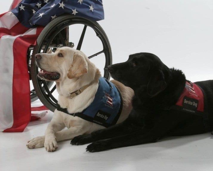 dog nonprofits