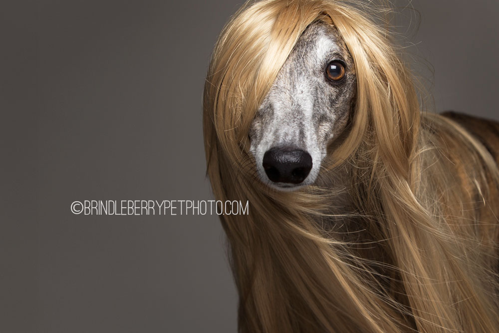 Dogs Showcase The Latest Trends In Human Hair And We Think