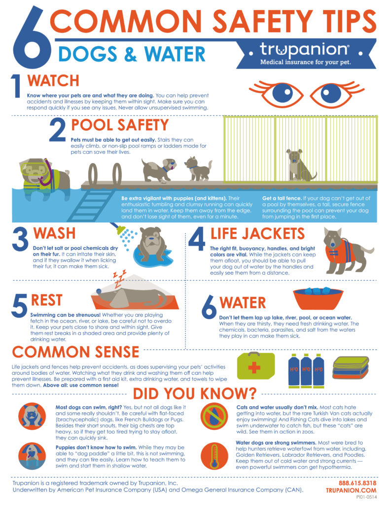 For more tips on how to safely keep your pet cool this summer you can check out Trupanion.com for expert advice.