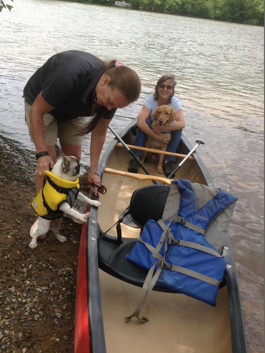 PEPE the French Bulldog- 4 months old - getting used to a canoe in one of Brenowitz's classes.  Image source: AnimalsDeserveBetter.org