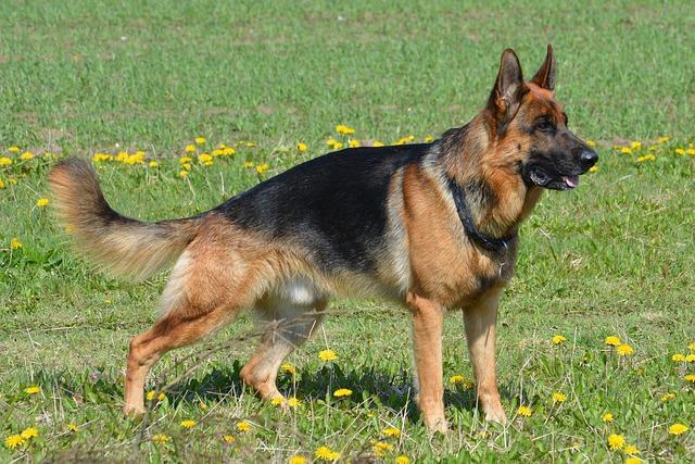 I Heart Love German Shepherd Dog Men /& Women Quick Dry Running Beanie Hat