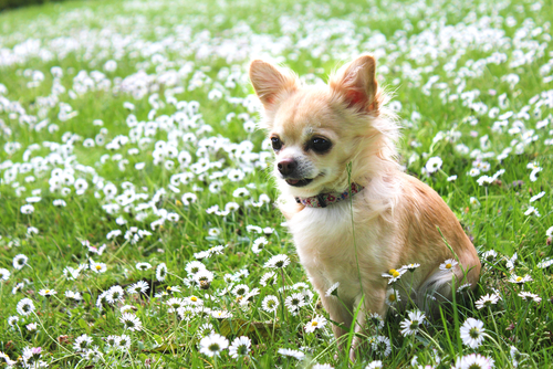 15 Dog Breeds That Totally Love Warm Weather