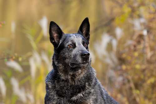 Best Dog Breeds For Florida Weather