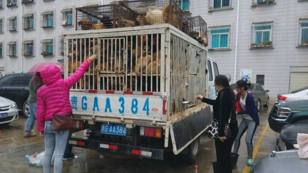 One of the Trucks intercepted by Chinese activists. Yunnan July 4 Dog Rescue Image source: HSI