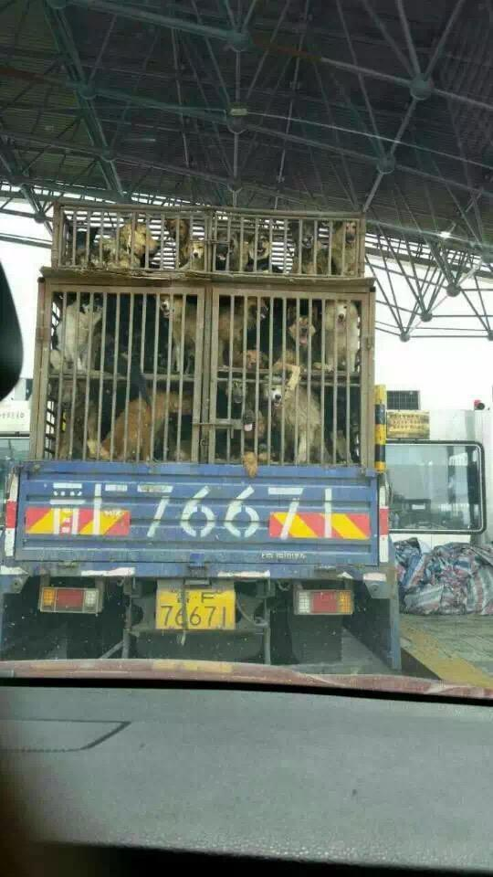 This truck was intercepted on July 13 in Beiging, China. Image source: HSI