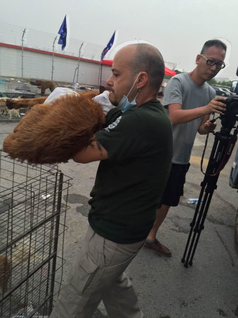 Activists with the China Animal Protection Power activist network care for dogs rescued from a truck transporting them to slaughter. The activists intercepted the truck near Qinhuangdao on July 9 and transported to dogs to Dalian where they will be cared for and put up for adoption with help from Humane Society International.