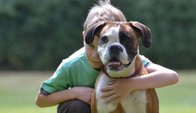A boy in a green shirt crouching with his arm around a Boxer dog.