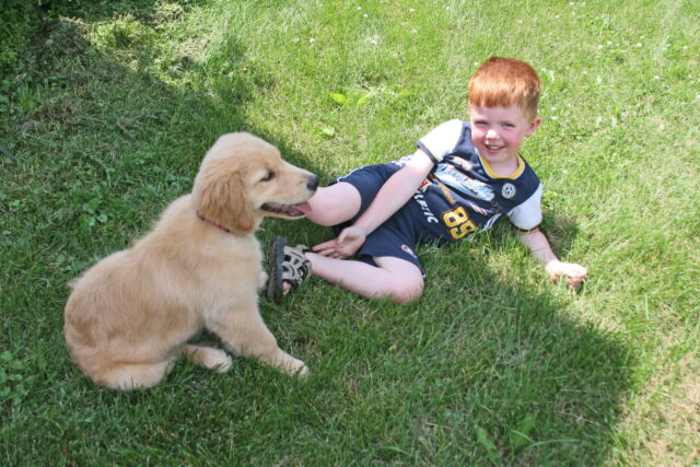A Golden Retriever puppy sitting in the grass with a small child.