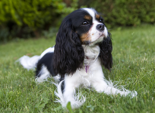 Guard Dog Breeds For Families With Children