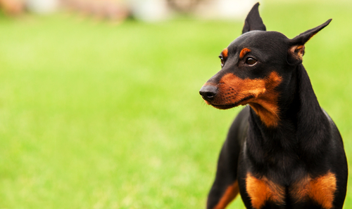 The Least Smelly Breed Of Dogs