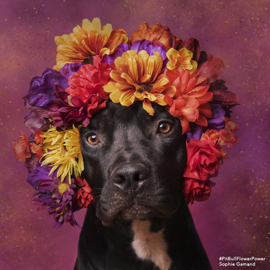 Photographer Uses Flower Power To Help Abandoned PitBulls Find Forever Homes