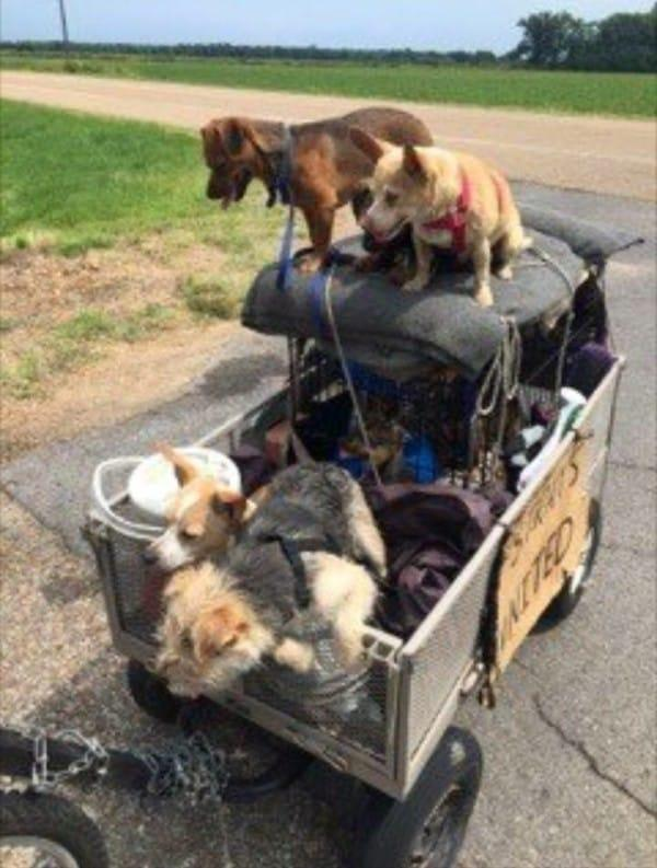 Photo Source: Facebook - Steve's Strays United Across the USA