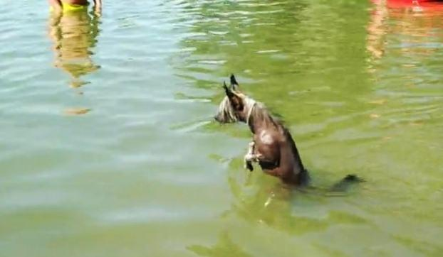 Chinese Crested Has A Very Funny Way Of Swimming In The Lake