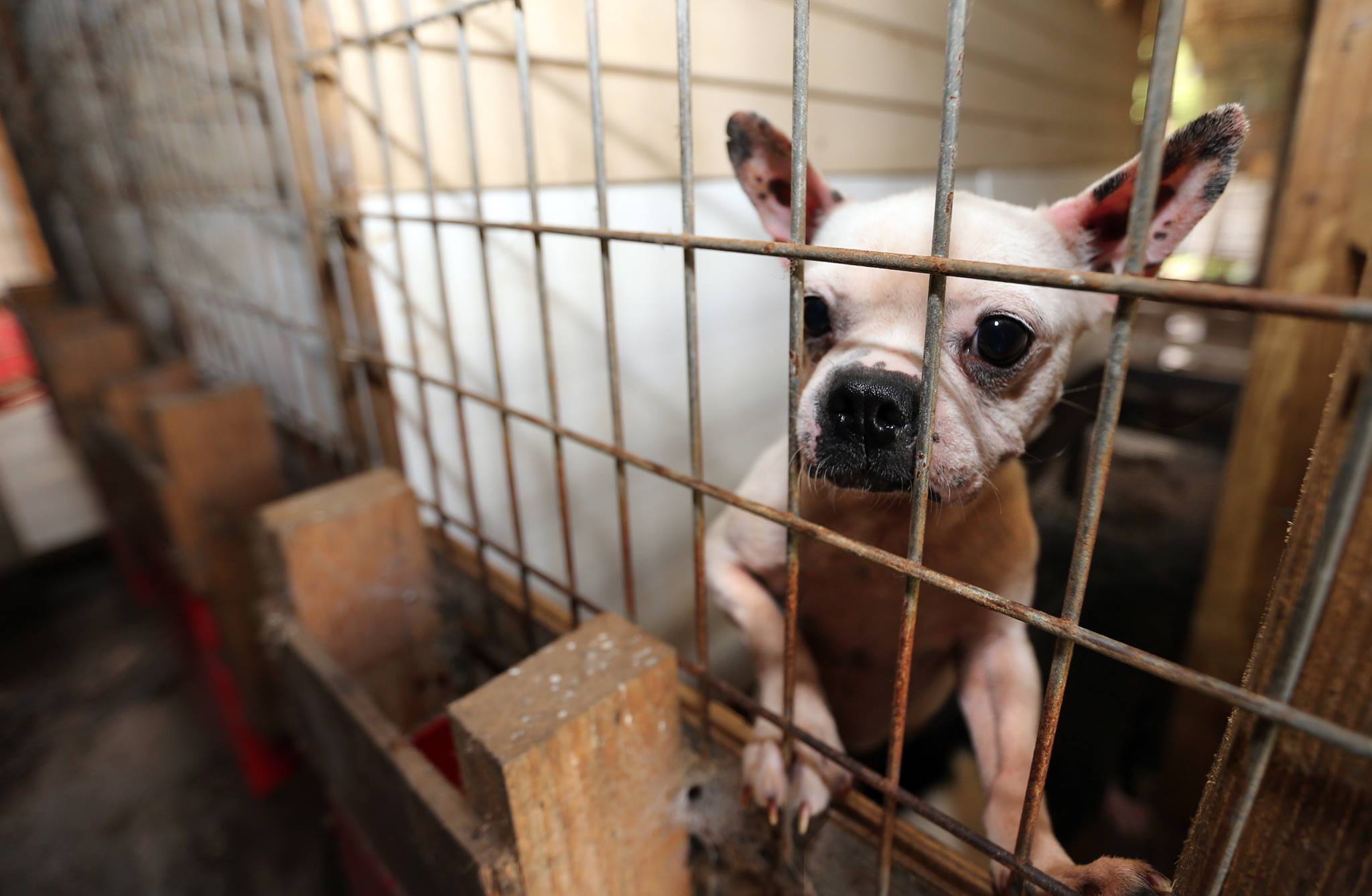16 States Named In 100 Worst Puppy Mill Breeders In The