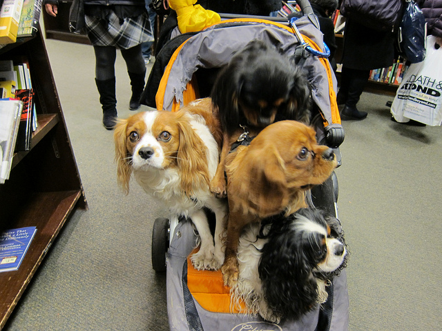 Running Errands? These 14 Major Stores & Restaurants Are Dog Friendly!