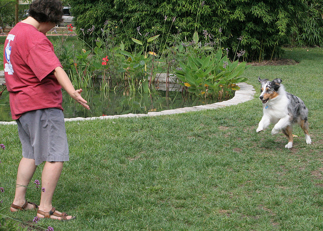 This lady is obviously acting excited to get her dog to be excited to run toward - a great tactic to get a quick recall Image source: CrystalRolfe via Flickr