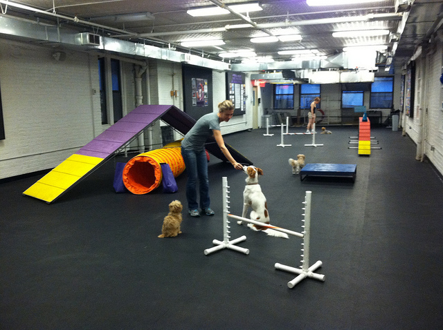 A professional trainer calmly rewards two dogs working in a distracting environment.  Image source: AndreaArden via Flickr
