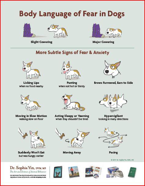 Body Language To Make Dogs Feel Comfortable