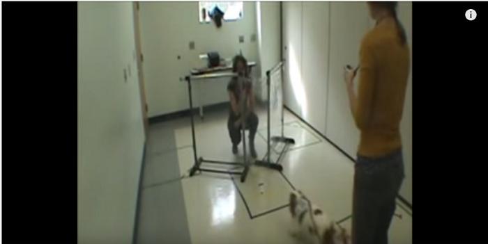 Dogtrainingstudy1