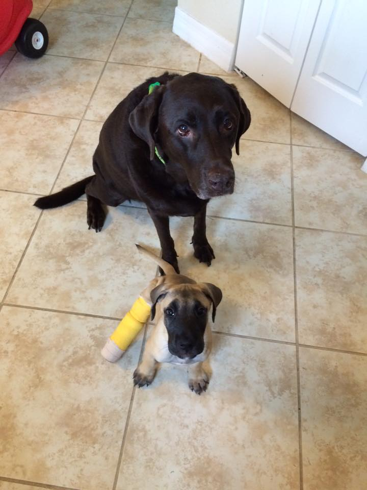 Rosey with her Foster brother