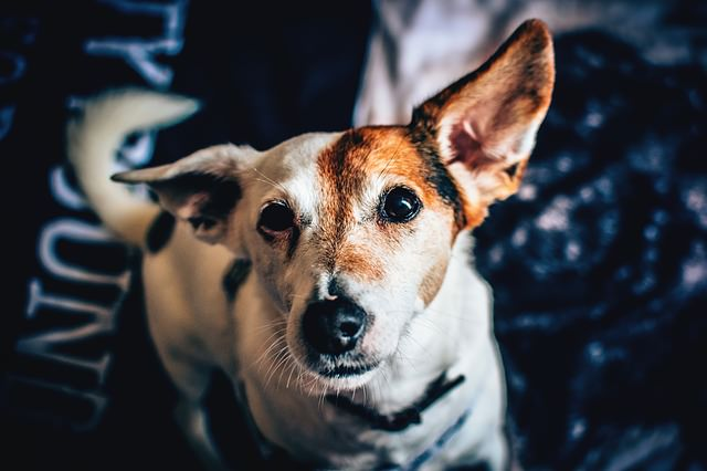 9 Signs Your Dog May be Hard of Hearing