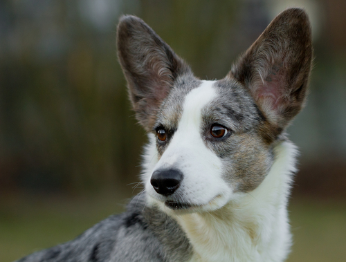 12 Of The Easiest Dog Breeds To Train