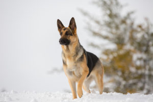 12 Of The Best Canine Breeds To Practice
