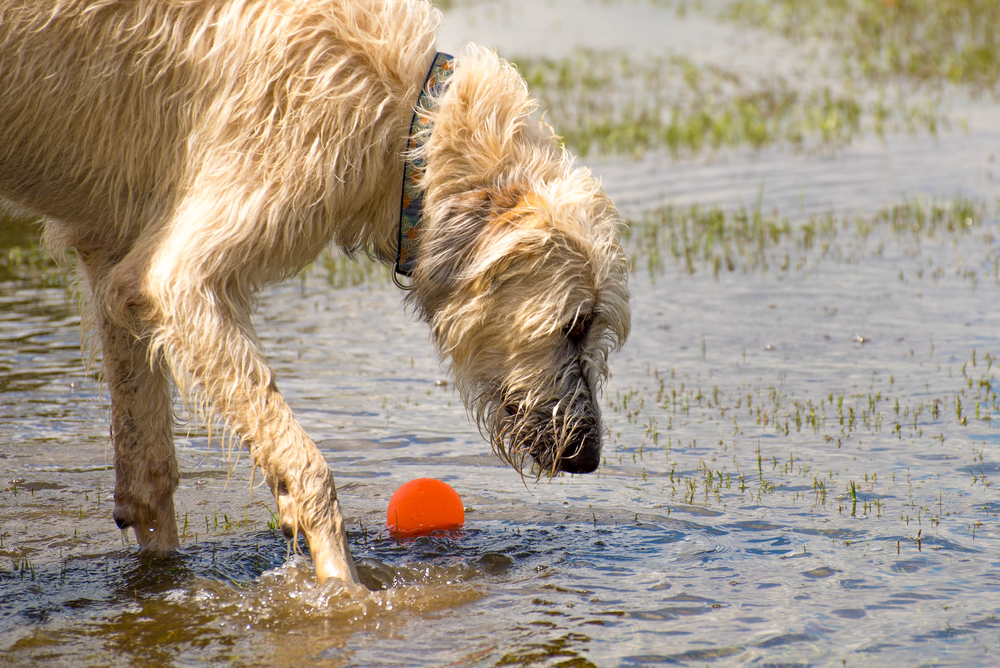 Go Fetch: How Dogs See Pointing