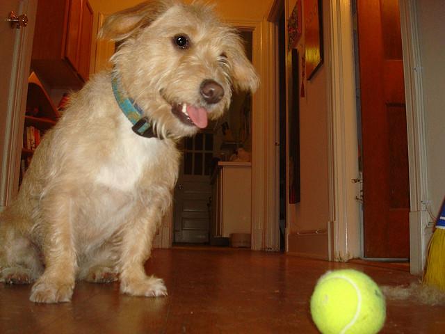 how to teach a dog to fetch and retrieve