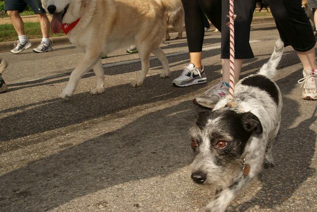 The Surprising Dangers Of Dog Collars