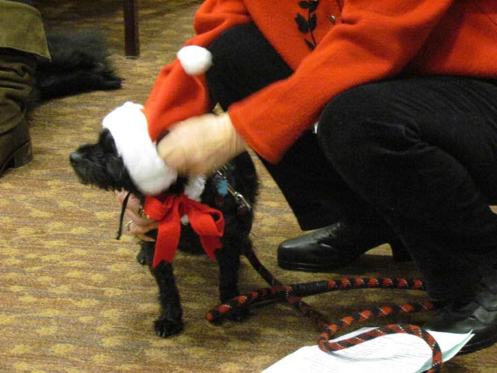 One of Greenspring's canine inhabitants enjoying the Holiday Pet Parade in 2014. Image source: Greenspring