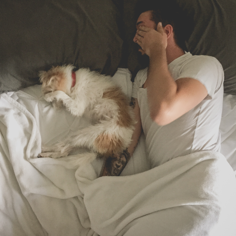How To Create The Perfect Morning Routine With Your Dog Iheartdogs